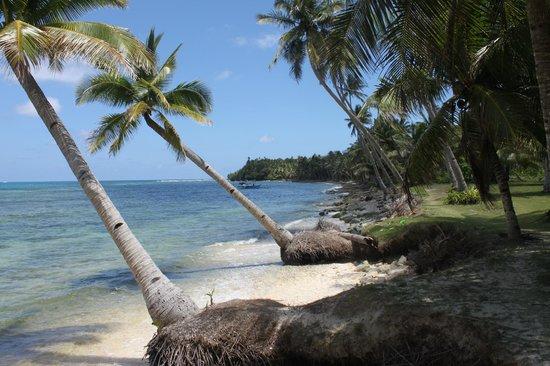 Siargao Divers Club: Daco Island