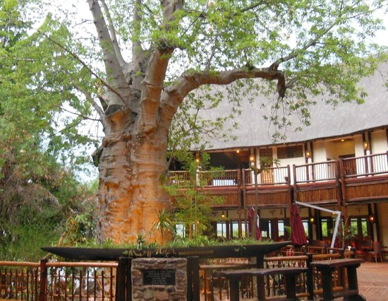Cresta Mowana Safari Resort and Spa: Baobab  dans le lobby