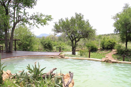 Impodimo Game Lodge: Piscina