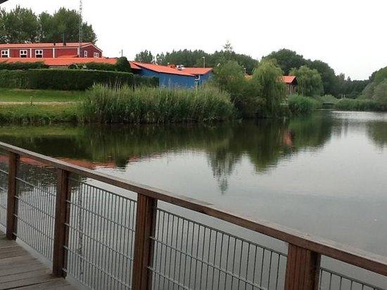 Waterlodge de Aalscholver : The pond