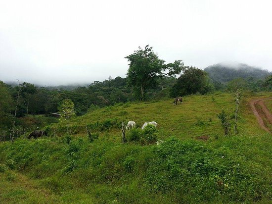 Chachagua Rainforest Eco Lodge: Horses