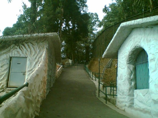 Padmaja Naidu Himalayan Zoological Park: Himalayan Zoological Park