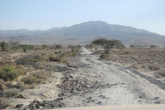 Olorgasailie: The track leading to the accommodation