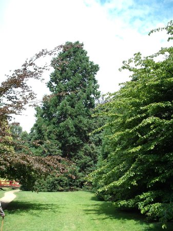 Lower Gardens: Giant Sequoia, Upper Gardens