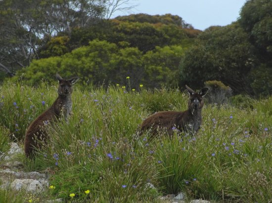 Blue Ray Lodge: Roos Everywhere
