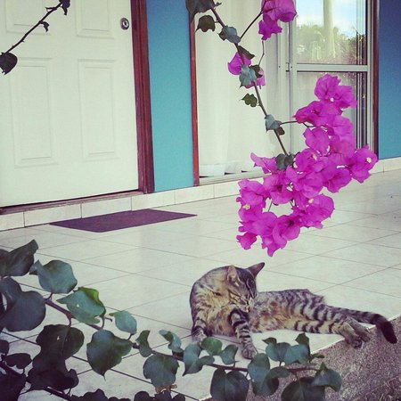 Hostal Petero Atamu: Streetcat who hang at the hostal. Loves to be cuddled