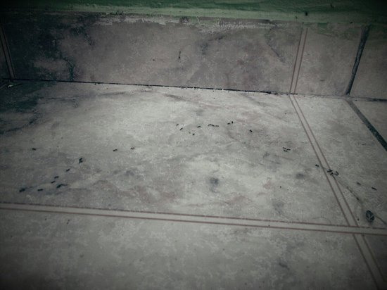 Hostal Petero Atamu: The ANTs who lived in our room :/