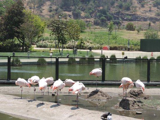Parque Bicentenario : Flamingos