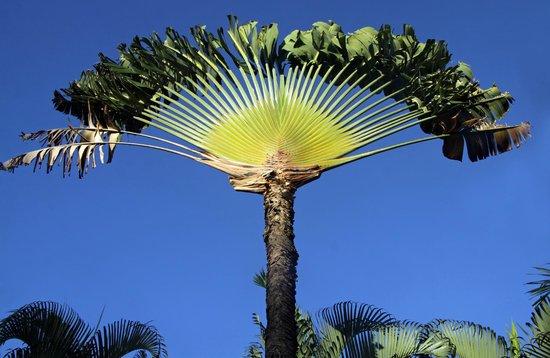 Hotel Riu Naiboa: Wunderschöne Pflanzen