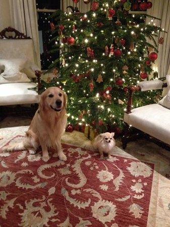 Egerton House Hotel: Christmas at The Egerton