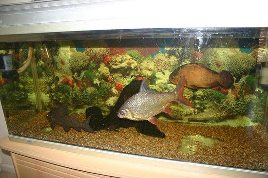 Villa Atlantica Boutique Guesthouse : fishies