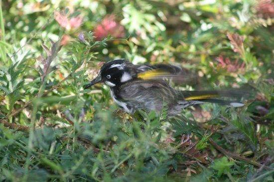 Captain Cook Holiday Park: Local bird