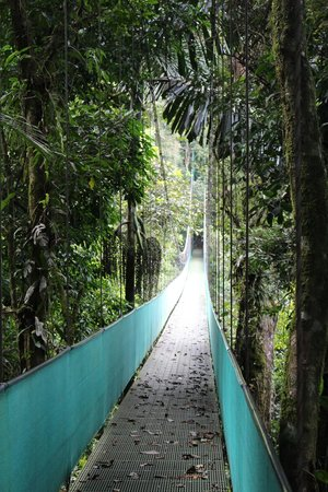 Arenal View Theme Park: Hanging bridge