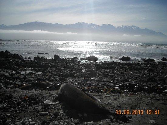 Ohau Point Seal Colony: leone marino e splendido sfondo