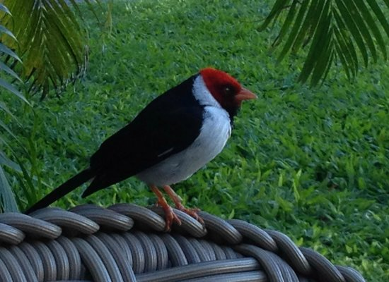 Mauna Lani Bay Hotel & Bungalows: Christmas day visitor at breakfast