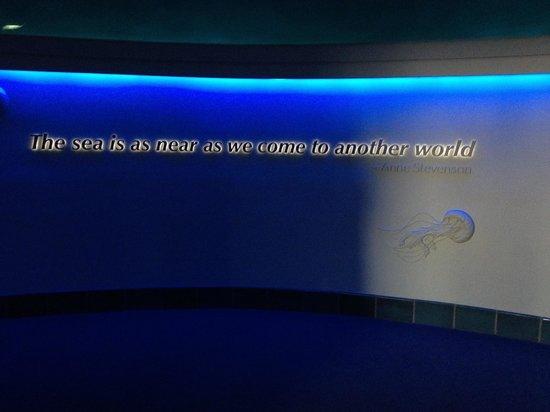Nice quote - รูปถ่ายของ Monterey Bay Aquarium, มอนเทอร์เรย์