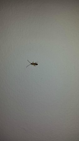 Found Places Clifton Hotel South Beach: Bugs