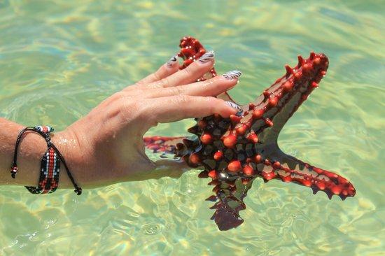 Garoda Resort : cosa si trova durante la bassa marea