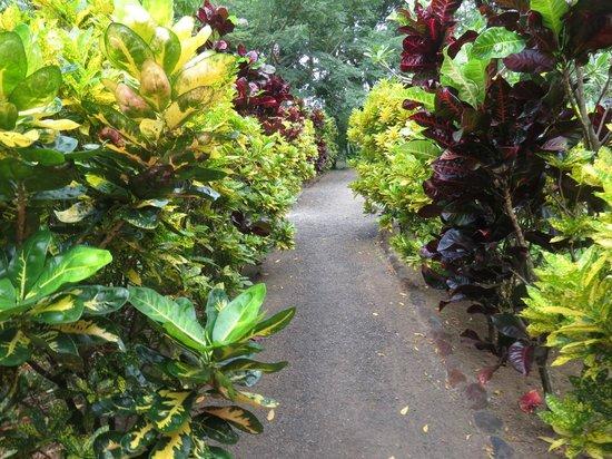 Hospedaje Soma: Beautiful grounds