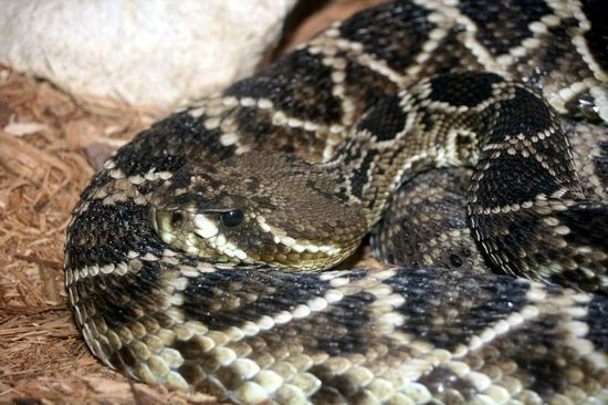 Tallahassee Museum: Snake