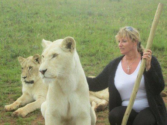Botlierskop Private Game Reserve: Walking with lions nov26 2013