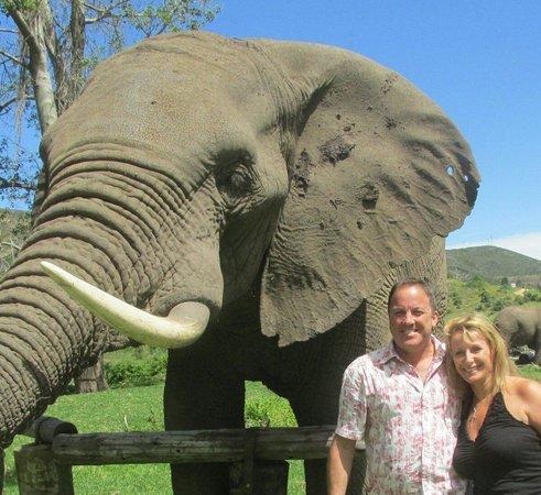 Botlierskop Private Game Reserve: Elephant picnic Nov 26 2013