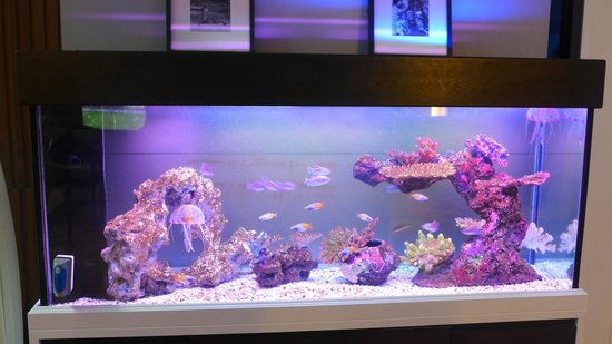 iCheck Inn Silom: fish tank in the lobby