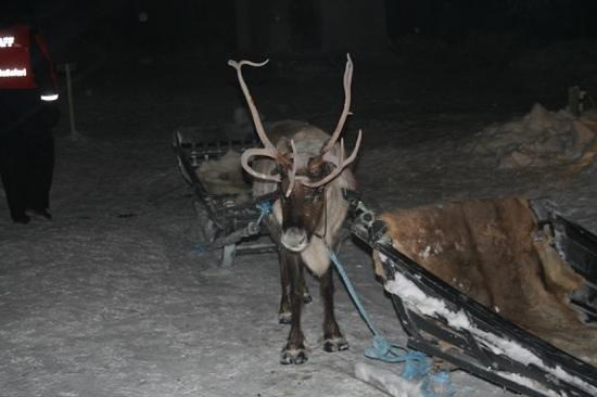 Escapade Day Trip: Reindeer