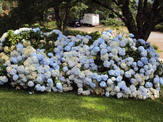 Flores diversas foto de le jardin parque de lavanda for Jardines de lavanda