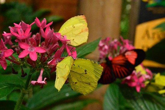 Hosteria Mariposas de Mindo : Butterfly garden