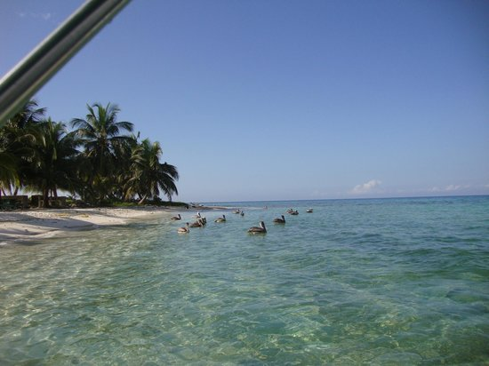 Laughing Bird Caye National Park: Beautiful water, and Pelicans.