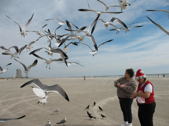 """Quality Inn: Location is not too far from a Galveston beach that you can """"feed the birds""""."""