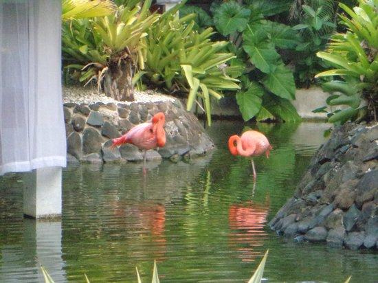 Paradisus Punta Cana: Área do Hotel em outro restaurante
