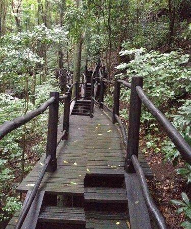 Sugar Beach, A Viceroy Resort: Rainforest Path (near the Spa)