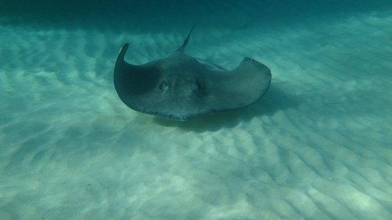 Native Way Watersports : Stingray City