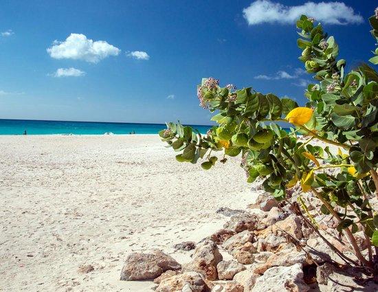 Tamarijn Aruba All Inclusive: The beach in front of our room