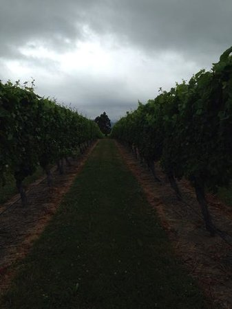 The Marlborough Lodge: walk through the vines