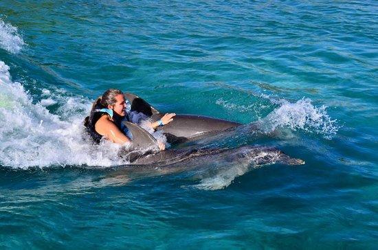Roatan Institute for Marine Sciences - Anthony's Key Resort: Dorsal Fin Ride