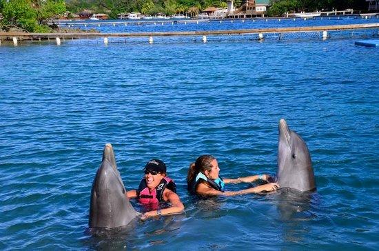 Roatan Institute for Marine Sciences - Anthony's Key Resort: Dolphin Shake