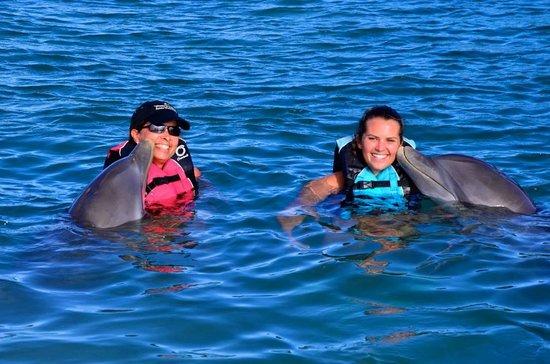 Roatan Institute for Marine Sciences - Anthony's Key Resort: Dolphin Kiss