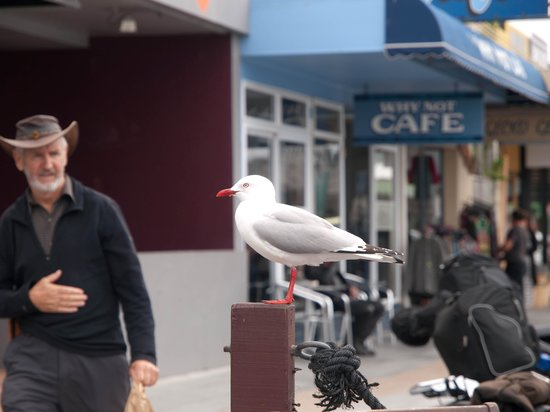 The Reserve Hutt: Oh those seagulls!