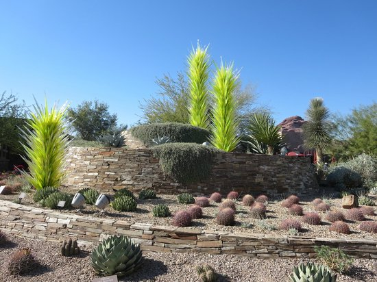 So Many Different Cacti Picture Of Desert Botanical Garden Phoenix Tripadvisor