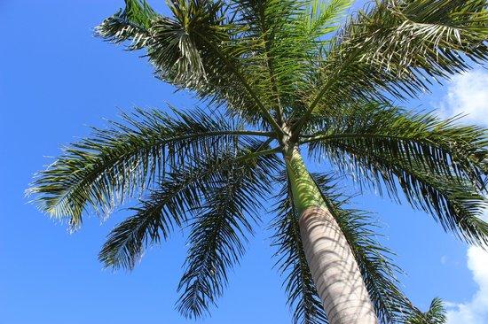 Zoetry Agua Punta Cana: 10
