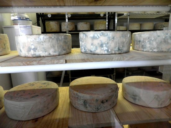 Witches Chase Cheese : Blue Cheese