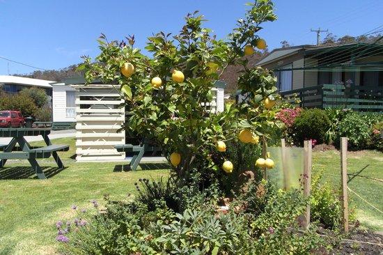 BIG4 Bicheno Cabins: Our gardens and BBQ area