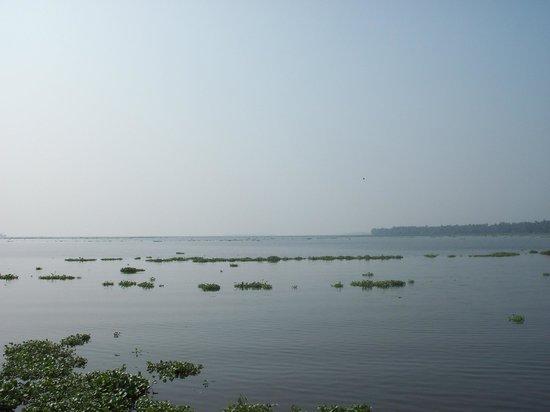 Kumarakom Bird Sanctuary: The backwater and Vembanad lake at the far end
