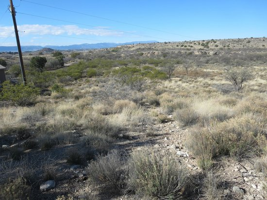 Montezuma Well National Monument: the scrub along the path