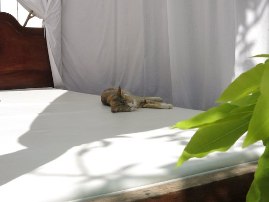 Hilary's Boutique Hotel: Even the cat is relaxed here.