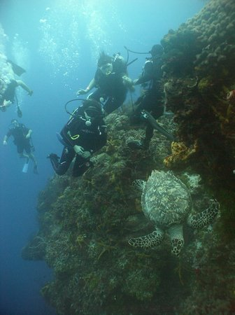 Columbia Reef: A turtle on the wall!