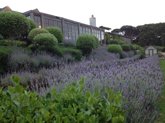 Mudbrick Vineyard & Restaurant : herb garden